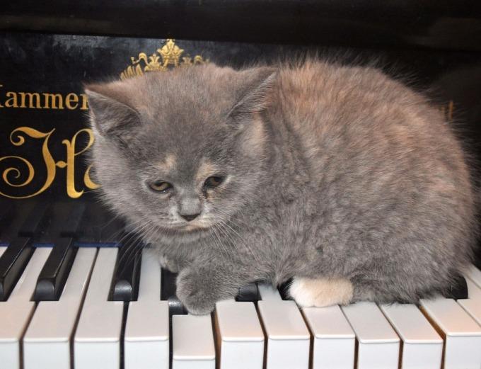cat-1248013_960_720