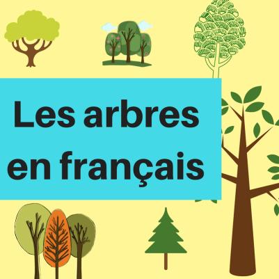 Apprenez les noms des arbres en français !