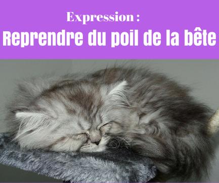Connaissez vous l'expression en français « reprendre du poil de la bête » ?