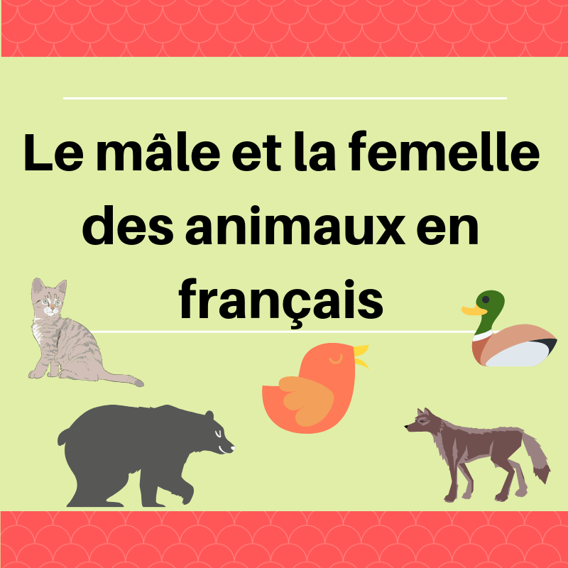 Découvrez les noms du mâle et de la femelle des animaux en français !